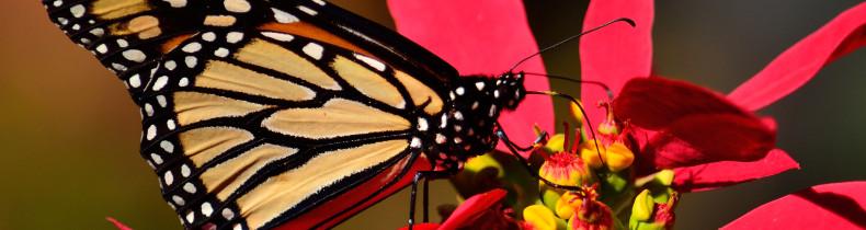 shutterstock biodiversité_774049717